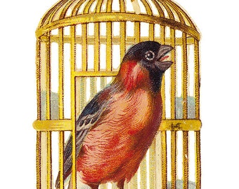 Vintage Image- Bird In Cage- No.44580- Image Download