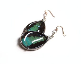 Real Butterfly Dangle Earrings: Graphium in Aqua Teal Blue and Black