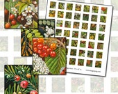 Trees and Blossoms Botanical Scrabble sized digital collage sheet .75 x .83 in 19mm x 21mm fruit trees orchard berry leaves green