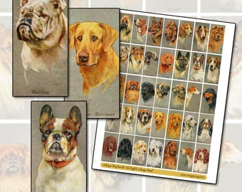 Antique Dog Breeds Digital Collage sheet for domino jewelry decoupage 1x2 size 25 mm x 50 mm rectangle necklace pendant purebred purebreed