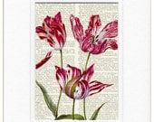 Tulips17th century Tulip painting