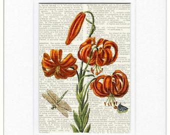 1600's botanical II print