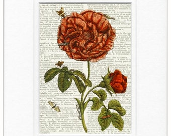 Rose dictionary page print
