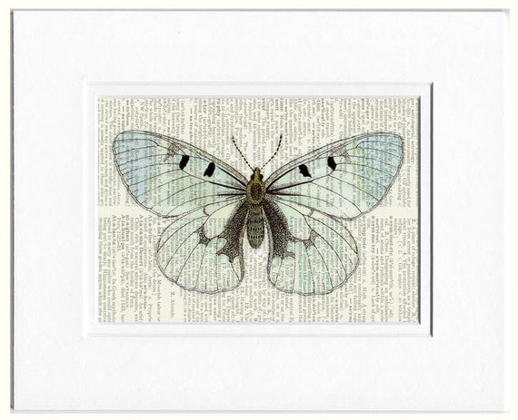 butterfly, transparent butterfly print