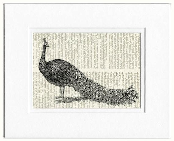 Peacock in black print