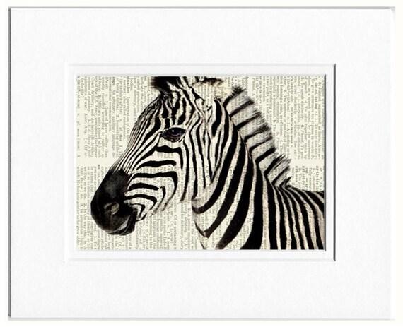 zebra portrait photo