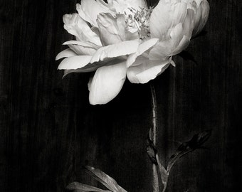 black and white_no_13