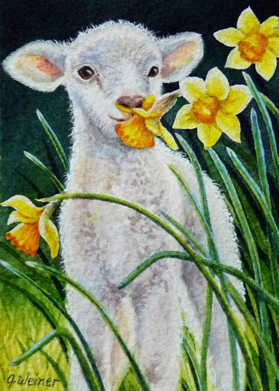 ACEO Limited Edition Watercolor Print Lamb & Daffodils by J. Weiner