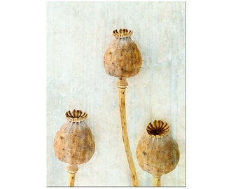 Poppy Pods Rustic Nature Still Life Textured Seeds Dreamy Botanical Photography