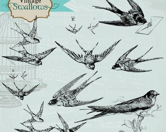 Vintage Swallows Digital Clipart and Photoshop Brushes: Commercial and Personal Use