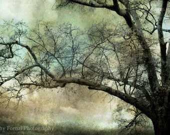 Nature Photography, Surreal Fantasy Trees Nature Landscape, Dreamy Haunting Ethereal South Carolina Trees, Mint Green Teal Nature Tree Print
