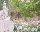 Paris Photography - White Flowers at the Palais Royal Gardens, Floral French Fine Art Travel Photograph, Wall Decor