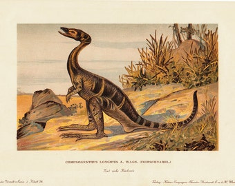 1900 Gorgeous DINOSAUR fine lithograph, COMPSOGNATHUS LONGIPES 112 years old gorgeous print.