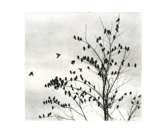 Doves, etching, cool B&W tone