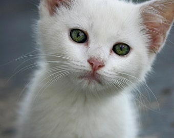 White, Green,  Kitten, Nursery Decor,  Cat lover, Green Eyes, Pink  - 8x10 Print -  Other Sizes Available