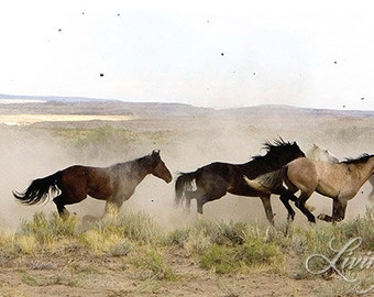 Stallions Released - Fine Art Wild Horse Photograph - Wild Horse - Adobe Town