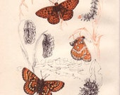 Vintage Butterfly Print, Wall Art Illustration, Farmhouse Chic, Rustic Home Decor ,1945 Book Plate III