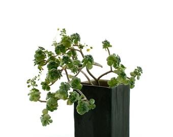 Vase or Cache-Pot, Faux Bois with 4 Feet