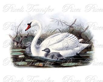SWAN Instant Download Digital image, Digital Downloads, white mute swan wedding birds clipart 232