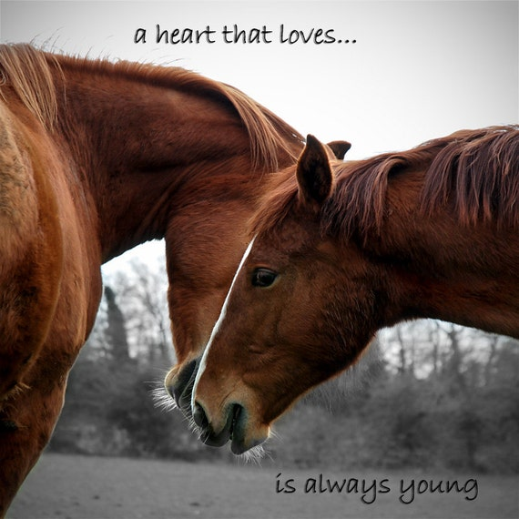 inspirational quotes about horses quotesgram