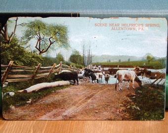 Antique Postcard, Helfrich's Spring, Allentown, Pennsylvania 1908 Vintage Paper Ephemera