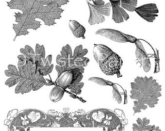 Leaves, acorns for STEAMPUNK and Mixed Media, Victorian Line Art Illustrations Digital Collage Sheet in both JPEG and PNG files, CS13-195f
