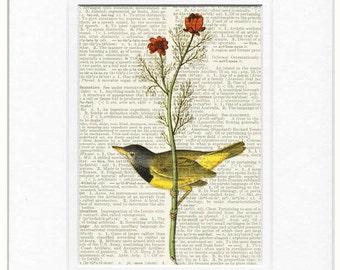 Audubon Bird Warbler print