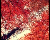 Red Dream - Fine Art Print - Nature Photography - Red White TTV - For Tree Lovers - Etsy Wall Art - TFTeam
