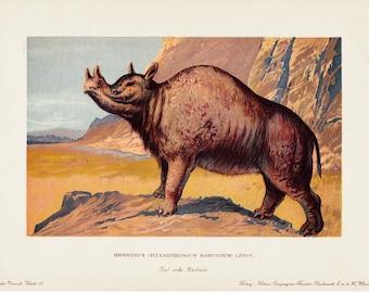 1900 Antique DINOSAUR fine lithograph, Brontops ( TITANOTHERIUM ROBUSTUM) leidy, extinct animal a giant rhino. 112 years old gorgeous print.