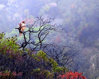 Red Tail Hawk, Foggy Morning, California Bird Photography, Foggy Landscape Photography, Colorful Nature Photography, Catherine Natalia Roché