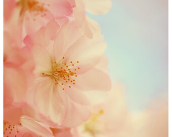 Flower Photograph - Nature Photography - Pink Art - Cupid -  Spring Art - Cherry Blossom Print - Fine Art Photography - Gift For Her - Bock
