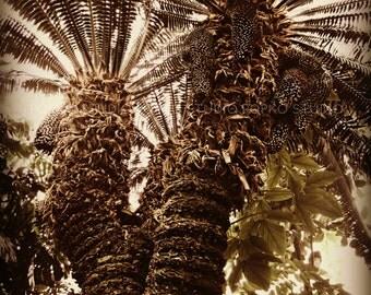 Vintage Palm Trees, Fine Art Print, 8x10, Metallic Print