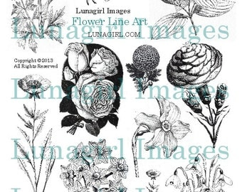 Victorian Flower Drawings Flowers art digital collage sheet vintage    Victorian Flower Drawings