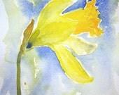 Daffodil Original Watercolour Painting Small Format Art SFA