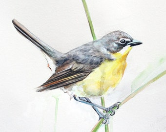 Yellow Breasted Chat watercolor print
