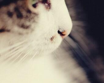 cat photography, animal photograph, white home decor, feline art, cat home decor, nursery art decor Kitty Love