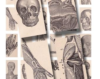 vintage anatomy for 1 x 2 inch domino art, digital collage sheet no. 801