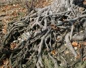 Tree roots stock photo image free use