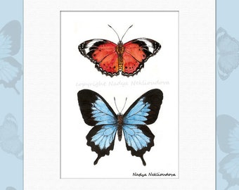 Butterflies - Matted Art Print - 5x7inches matted to 8x10 inches - fine art giclee reproduction, woodland natural history art