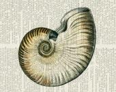 nautilus shell II print