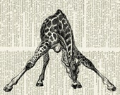 giraffe print featured on camillapihl.no blog