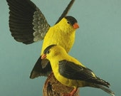 ON SALE Wood Carving of a Pair of American Goldfinches
