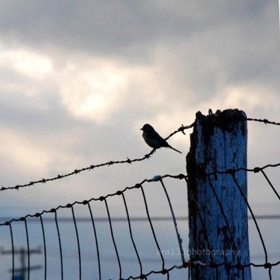 Bird Photography Gray and Blue Wall Decor Animal Photo Nature Decor Landscape Photo 5x5 inch Fine Art PhotographyPrint On The Fence