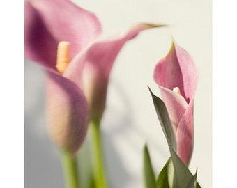 Pink Calla Lily  Photograph,  Floral Wall Decor,  Still Life Print, Nature Photography