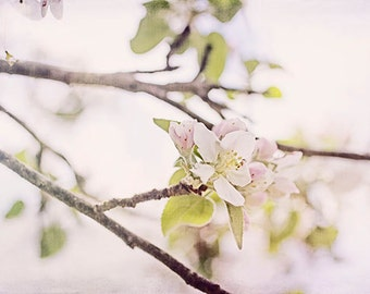 Apple Blossom Photograph, Flower Photography, Rustic Decor, Pastel Wall Decor, Bedroom Decor