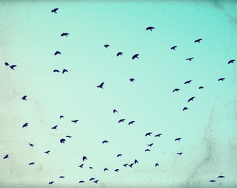 "Birds flying print | nature photography | flock of crows black birds | aqua teal print | turquoise sky ""As the Crows Fly"""