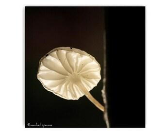 Tiny Mushroom in the Morning Light Print  Photography Prints Nature Photography Decor Nature Lover Woodland Scene Fungi