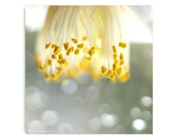 Stamen Chandalier Photograph Stamen Print...Affordable Home Photography Prints Nature Photography Nature Lover Woodland Scene Flower