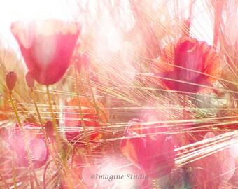 Still Life Photography, Poppy Flowers,  Flower Photo, Landscape, Spring, Summer, Fine Art Print, Coral, Orange, Yellow, Home Decor, Wall Ar