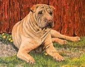 Shar Pei signed dog pet animal portrait painting print Donna Pellegata
